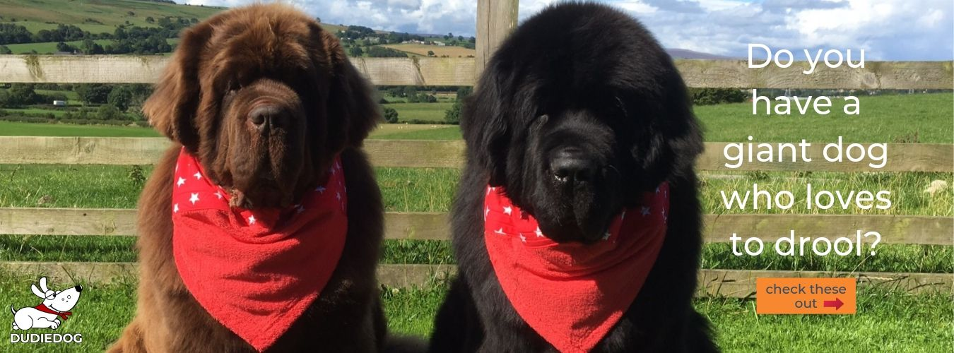 Fot the most practical and stylish dog bibs in 2019 check out Dudiedog Bandanas UK