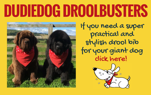 Practical and stylish Droolbuster dog bibs handmade in Yorkshire by Dudiedog Bandanas. Free UK delivery
