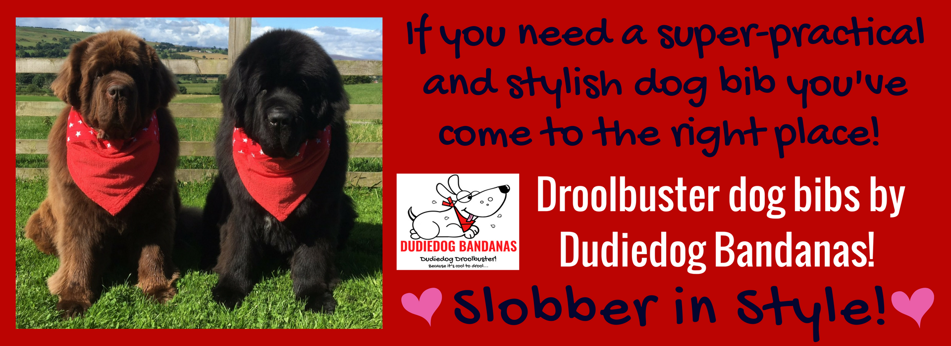 If you need a super practical and stylish dog bib check out the Droolbuster at Dudiedog Bandanas! Giant sizes available!