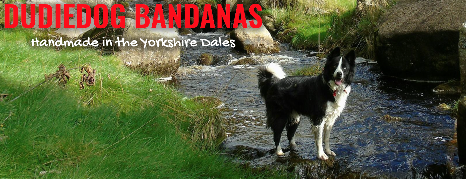 Shop for the best dog bandanas at Dudiedog Bandanas UK. Free UK p&p, Worldwide delivery