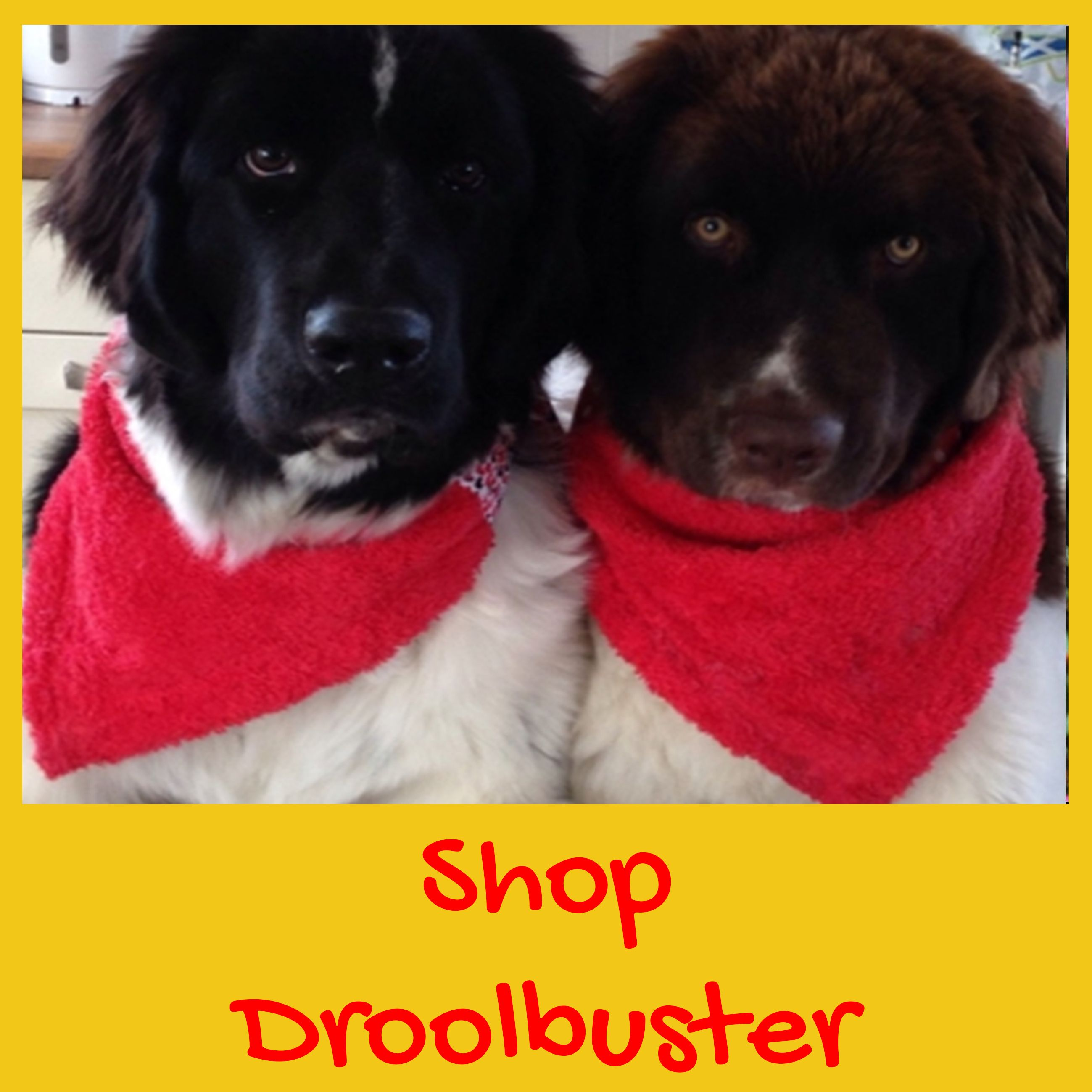 If your dog drools check out our unique Droolbuster dog bib, handmade by Dudiedog Bandanas UK.